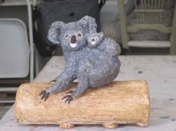 Koala patine