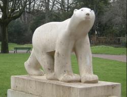 Ours blanc face droit