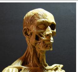 Reconstitution musculaire visage